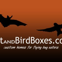BatandBirdBoxes.com - logo design and website